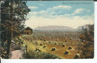 CC-315 WA Harvest Field Western Washington Divided Back Postcard