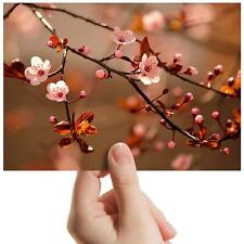 "Cherry Blossom Tree Sakura Small Photograph 6"" x 4"" Art Print Photo Gift #14126"