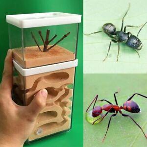 Ant Observation Box Ant Nest Formicarium Housing Ant Farm House Living Feeding