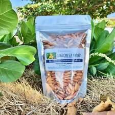 Jamaican Tropical Sea Almond Nut (Terminalia catappa)