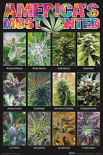 AMERICA'S MOST WANTED - WEED POSTER 24x36 - MARIJUANA SMOKING 241408
