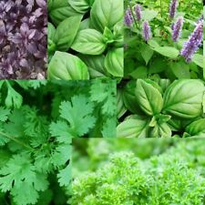 Heirloom Herb Seeds Basil/Coriander/Parsley/Rosemary/Sage/Thyme/Mint/Dill