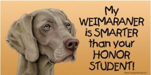 My Weimaraner is Smarter Than Your Honor Student Magnet 4x8 refrigerator car dog