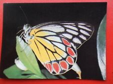 POSTCARD ANIMALS DELIAS EUCHARIS BUTTERFLY