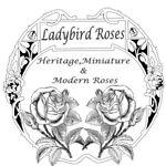 Ladybird Roses Rose Nursery