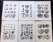 Palaeontology New-York 1867 Lot 6 Fossil Shell Prints. Book Plates