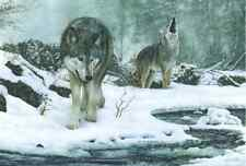 Limited Edition Wolf Print by Robert J. May
