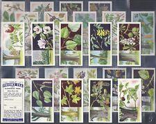 PRIORY TEA-FULL SET- FLOWERING TREES (24 CARDS) - EXC+++