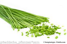 Schnittlauch ** vitaminreiches Gewürz vom Kräutergarten 100 frische Samen Balkon