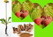 4 Jumbo Organic Herbal intercalaires Raspberry Leaf Dandelion Cannelle fibrome v...