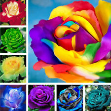 Egrow 100 Pcs Colorful Rare Rose Seeds Garden DIY Flower Bonsai Perennial Plant