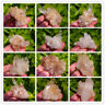 Natural Clear Quartz Cluster Crystal Cluster Mineral Specimen Healing
