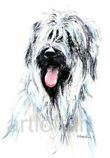 "BRIARD  DOG ACEO Card Print by A Borcuk   2.5""x3.5"""