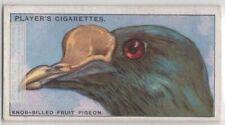 Knob Billed Fruit Pigeon Dove Strange Bird Beak 85+ Y/O Ad Trade Card