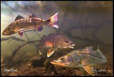 "Realfish H20 Series: "" Inshore Slam "" Snook Fish Mat Floor Mat Doormat 24x36"