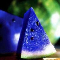 10pcs blue watermelon seeds fruit organic plant seeds
