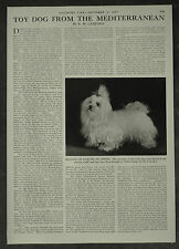 The Maltese Toy Dog From The Mediterranean History Of 1957 1 Page Photo Article