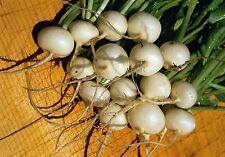 Vegetable - Radish - Hailstone  - 50g Seeds - Bulk