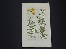 Sir John Hill, Botanical, The Vegetable System 1761-1775 Mudweed/Spineweed #06
