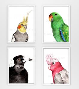 Set of 4 Australian Bird Prints - galah, cockatiel, eclectus parrot, magpie