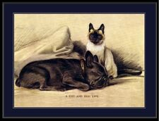 English Picture Print French Bulldog Dog Siamese Cat Puppy Kitten Art Poster