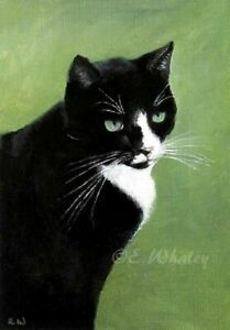 Black and White Cat Giclee 8x10 Open Edition Print with COA