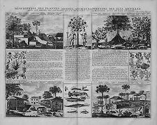 Antica mappa, Description des PLANTES arbres animaux & POISSONS des Iles Antille