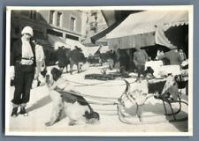 Suisse, Saint Moritz, Chien Saint Bernard attelé à un traîneau  Vintage silver p