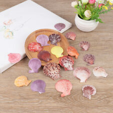 20Pcs Colorful Natural Seashells Decor Scallop Shells Crafts Decor Orname.kn