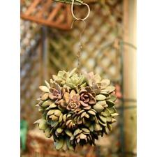 13cm Ball Shape Plant Holder Iron Wire Succulent Pot Hanging Planter NEW