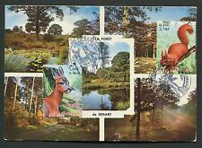 FRANCE MK 2001 EICHHÖRNCHEN REH SQUIRREL MAXIMUMKARTE MAXIMUM CARD MC CM d4694