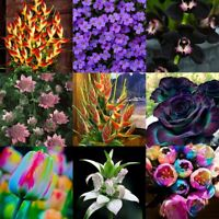 100 STÜCKE Seltene Blumen Samen Exotische Blumentopf Hausgarten Bonsai Pflanzen
