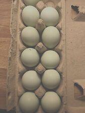 6+ Rare Pure Blue Black Splash Ameraucana Clean Hatching Eggs Ships Asap 03