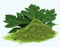 Pure Organic Papaya Leaf Powder Carica papaya High Quality Leaf Powder