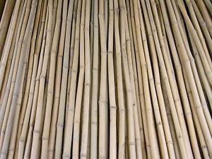 Bambusrohr Bambusstange Bambushalm Bambus Bambusrohre 25 x 1-2 x 2 m / 10 - 20