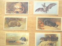 1983 Grandee BRITISH MAMMALS  rodent whale bat set 30 cards Tobacco Cigarette