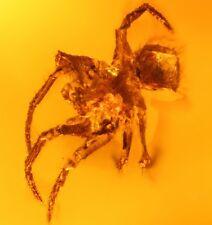 Spinne Araneae Insekt Inkluse Einschluss im Baltisch Bernstein +FOTO ir232