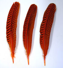 "3 Pcs PEACOCK QUILLS 10""-14"" Dyed ORANGE Feathers; Costume/Bridal/Halloween"