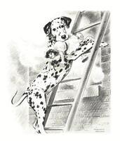 Dalmatian - Morgan Dennis Dog Print - MATTED