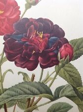 Best of Redouté's Roses, Large Folio book, 29 Lovely Frameable prints Redoute's