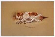 """WELSH SPRINGER SPANIEL WSS PUPPY DOG FINE ART PRINT - Lucy Dawson - """"Mac"""""""