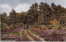 Unposted New Forest J Salmon Collectable English Postcards