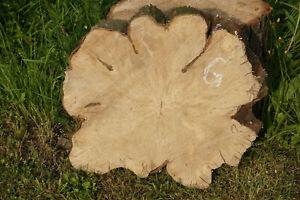Baumscheibe Holzscheibe Hainbuche Tischplatte Couchtisch Beistelltisch Deko - G