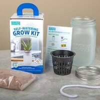 Back to the Roots  Self-Watering Planter  Grow Kit  Succulent and Cactus