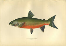 Beautiful HAND-COLOURED print of the fish  WILLOUGHBY'S CHAR  by Jonathan Couch