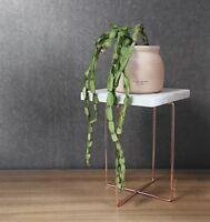 "Rhipsalis Paradoxa "" Chain Cactus"" ~ 1 cutting ~ Indoor Plant"