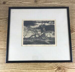 "VINTAGE LITHO BY EUGENE Mecikalski artist ""Aged Stump"""