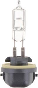 Phillips 894B1 Standard Fog Light 894 Fog Light Bulb