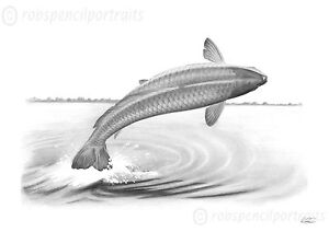 CARP CRASHING Fishing Drawing Art Print Carp Angler Present Gift For Fisherman