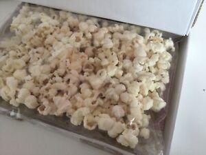 dog popcorn pawpcorn treat natural or cheesy flavour Movie Night Sharing holiday